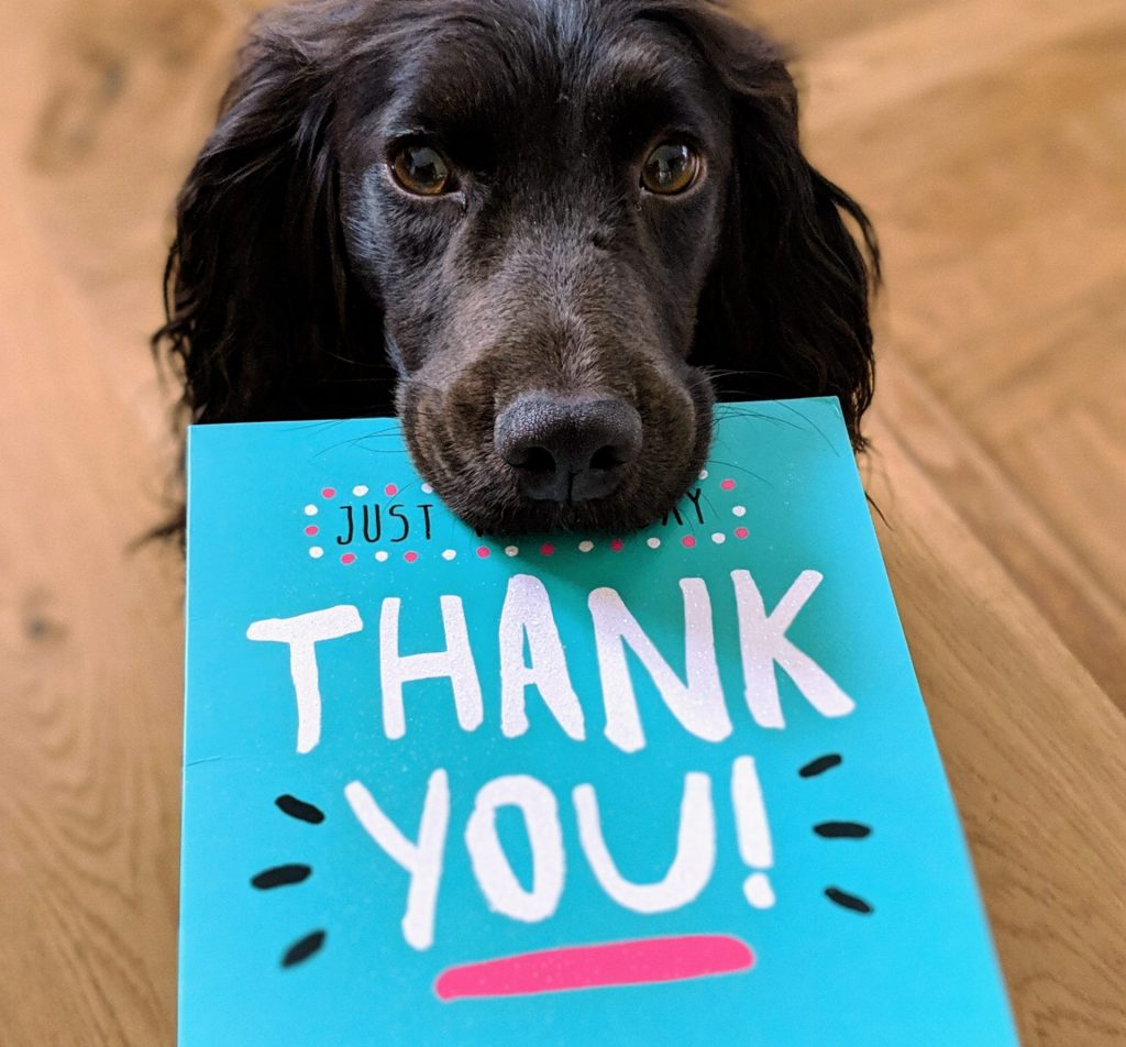Dog with thank you note