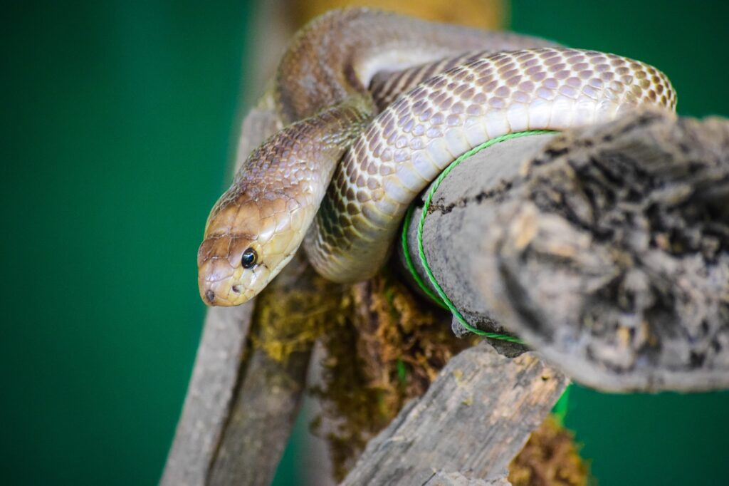 Snake wrapped around branch